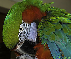 20070101-Pancho_Tubby_4.jpg