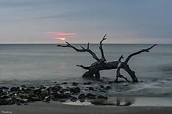 Jim_Driftwood.jpg