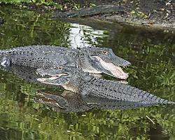 St_Augustine_Alligator_Farm2.jpg