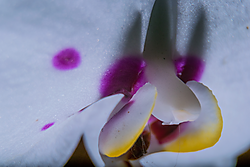Orchid002.png