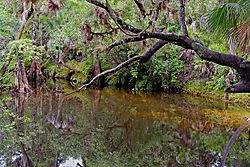 Telegraph_Creek_Swimming_Hole.jpg