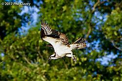Osprey-1-17.jpg