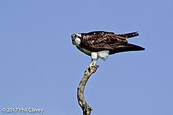 Osprey-1-3.jpg