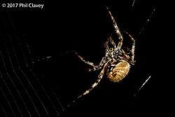 Spider-12.jpg