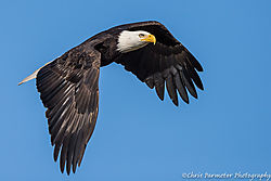 Eagle28.jpg