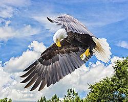 NOL_3007_Eagle_3.jpg