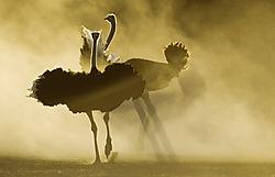 Dust_dance.jpg
