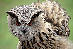 Tierpark_Hellabrunn_2015_007.jpg