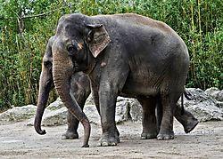 Tierpark_Hellabrunn_2015_016.jpg