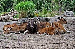 Tierpark_Hellabrunn_2015_031.jpg