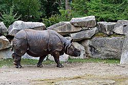 Tierpark_Hellabrunn_2015_046.jpg