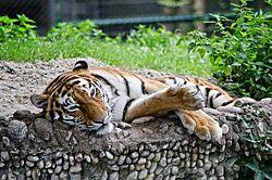 Tierpark_Hellabrunn_2015_051.jpg