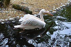 Tierpark_Hellabrunn_2015_106.jpg