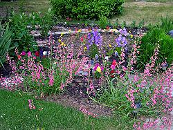 Penstemon-_-Bell-Flowers.jpg