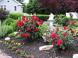 Red-Roses2.jpg