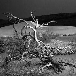 DesertDeadwood1x1B_Wb_DHR9044.jpg