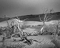 DesertDeadwoodB_W2_DHR9044_dfine.jpg