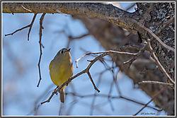 Late_Feb_birds-01.jpg