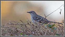 Late_Feb_birds-02.jpg