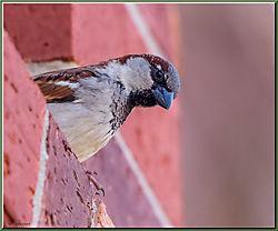 Late_Feb_birds-03.jpg