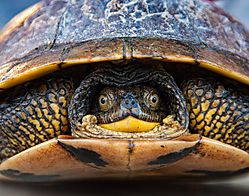 different_turtle_different_day-11.jpg