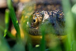 turtlecloseup-11.jpg