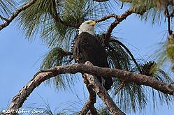 DSC_1741_eagle.jpg