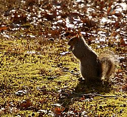Test Shots..Squirrel