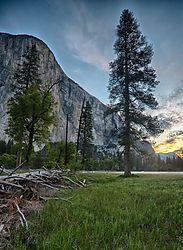 Tree_and_Sunrise.jpg