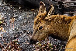 20161007_Yellowstone_387641.jpg