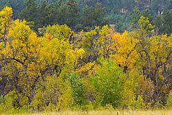 Fall_Foliage-1.jpg