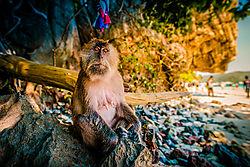 monkey21.jpg