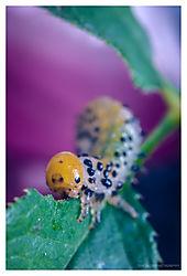 Caterpillar-Eating.jpg