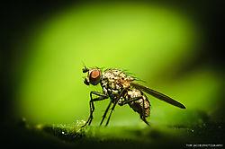 Fly_on_Leaf1.jpg