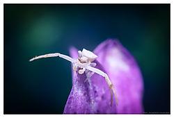 Karate-Spider-I.jpg