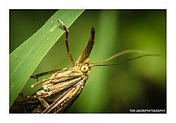 Moth_Grasstalk.jpg