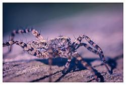 Spider-Walking.jpg
