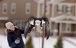 Eagle_lift_off_2.jpg