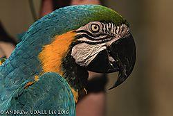 Macaw3.jpg