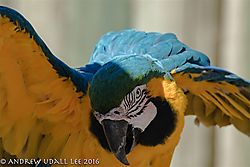 Macaw_2.jpg