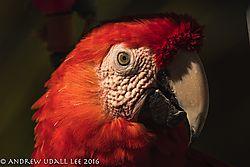 Macaw_3.jpg