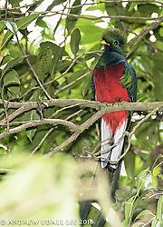 Quetzal_2.jpg