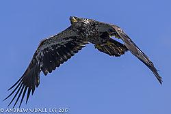 eagle_fish_close_up.jpg
