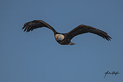 eagle_st_vrain_01102021.jpg