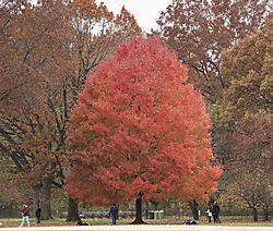 DSC_5521_-_Tree.jpg