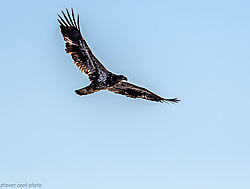 Eagle-2273.jpg