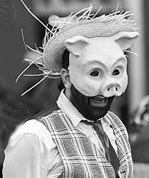 Pig_Face.jpg