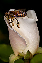 White_Roses1.jpg