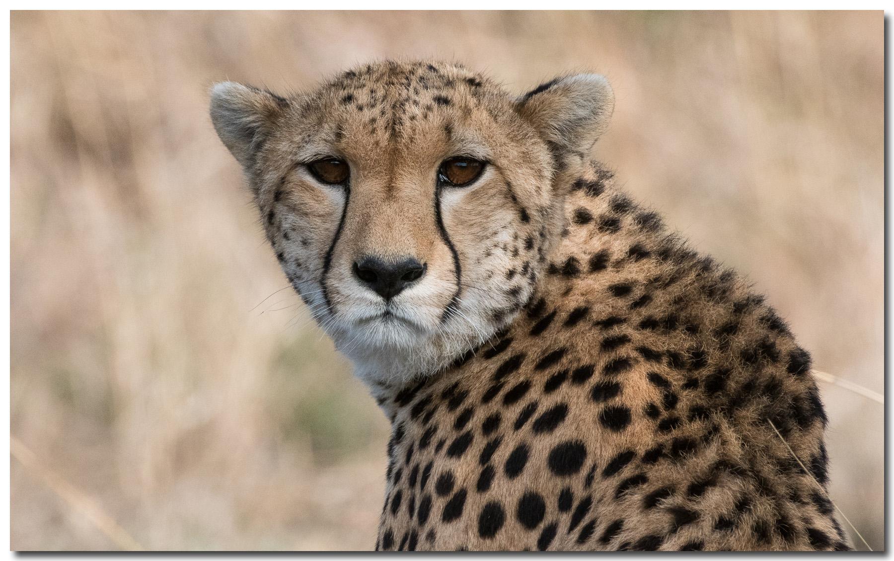 january_wildlife_henbo