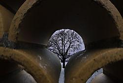 3Looking_Tree.jpg